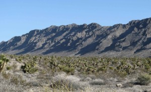 mountains, desert, vegetation, foreground