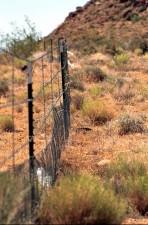 protection, clôtures, désert, tortue, habitat