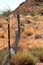 protective, fencing, desert, tortoise, habitat