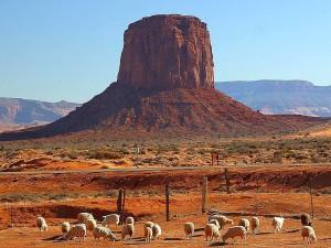 Rot, Wüste