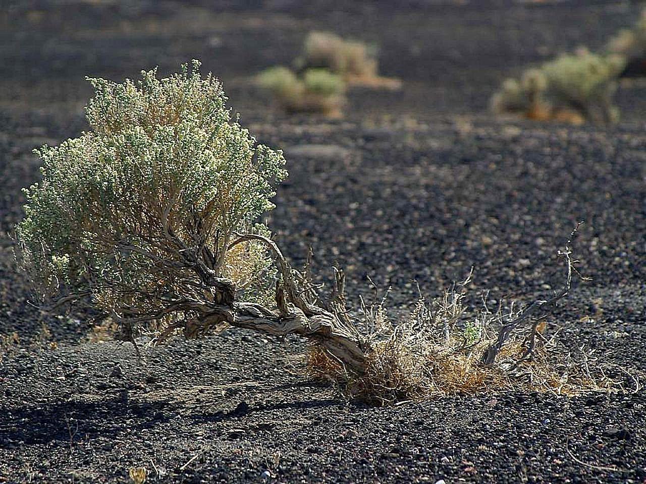 выбор две картинка полыни в пустыне труп