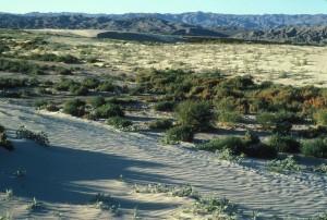 scenic, desert, environment
