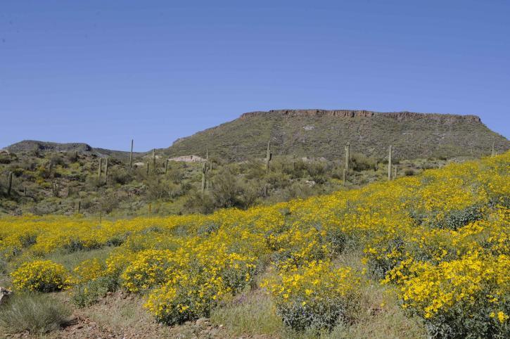 scenic, desert, spring