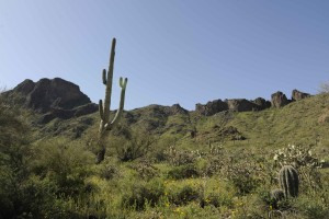 vegetation, sonoran, desert, cabeza prieta, national park
