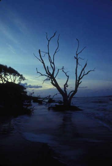 coastal, Amelia, island, water, low, light