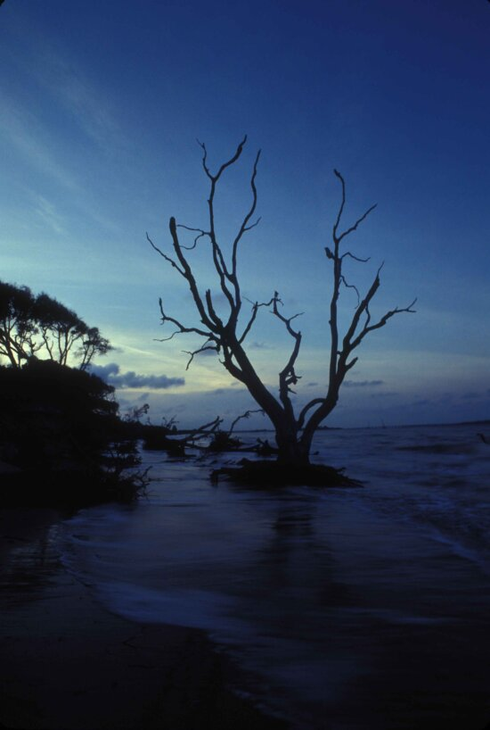 rannikko-, Amelia island, vesi, ammua kynttilä