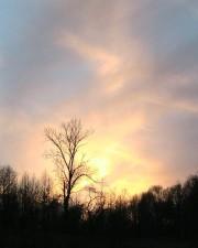 golden, evening