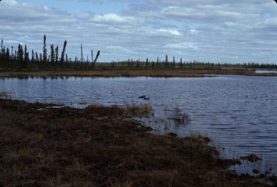 lake, dusk, shoreline, grass, dark clouds
