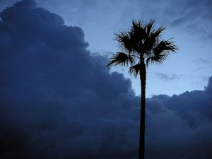 palm trees, morning