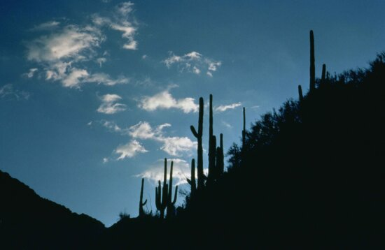 sabino, canyon, arizona, dawn