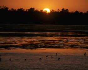 pittoresque, les oiseaux, l'eau, l'aube