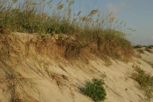 ビーチ、浸食、島、荒野、避難