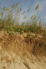 playa, erosión, costera, la erosión