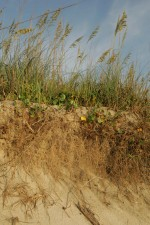Strand, Erosion, Küsten-, Erosion