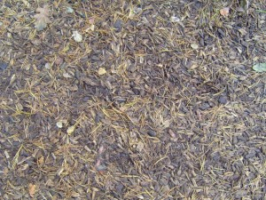 erdei talaj, fa, chips, fenyő, tűk