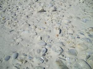 ground, stones