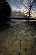 receded, waters, leaves, exposed, mud