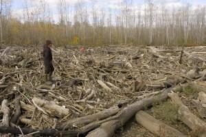 river, debris, river, flood