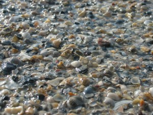 rocce, conchiglie, ciottoli, spiaggia