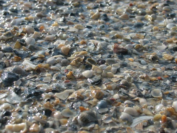 kameny, mušle, kamínky, pláž