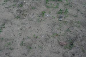 sabbia, erbaccia, terra