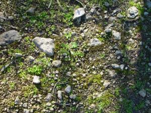 Steine, Flechten, kleinen, Pflanzen