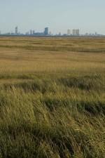 champ, au premier plan, les éoliennes, ville, scape, fond