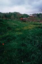 green grass, waterway