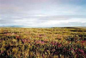 Arctique, désert, refuge, toundra