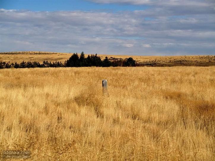 cemetery, high, grass