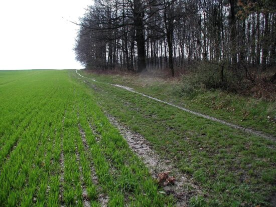 field, agricultural, land