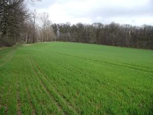 field, green, pasture