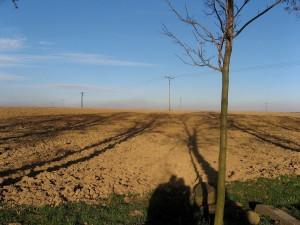 field, fall
