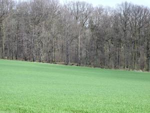 field, spring
