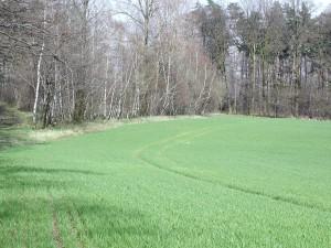 field, land