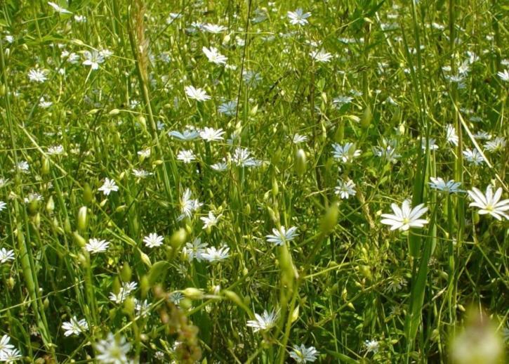 필드, 흰색 꽃
