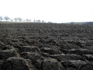 labour, domaine agricole