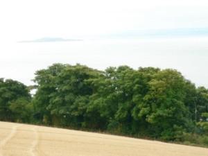 terrain, des arbres, de l'eau