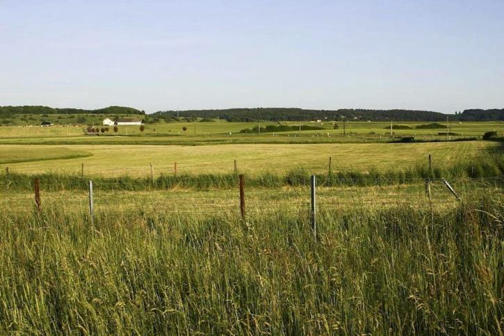 fields, high, grass