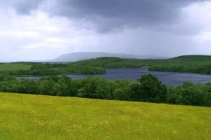 fields, meadow, flowers