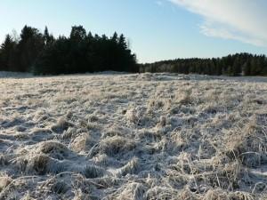 frost, field