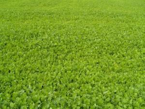 vert, acre, plantes