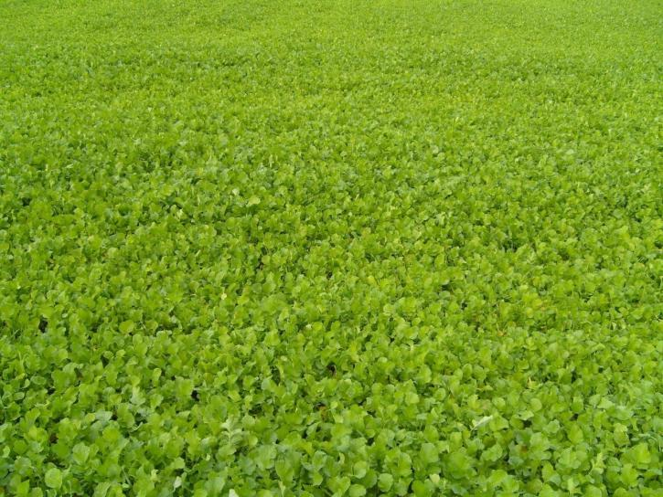 green, acre, plants