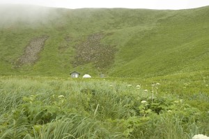green, field, valley, scenic, landscape