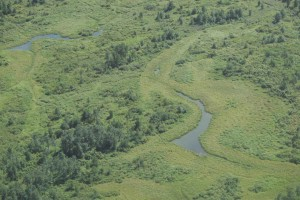 vert, champs, aérienne, photographie