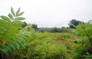 green, fields, scenic