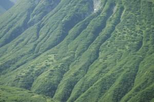 vert, collines, la perspective aérienne