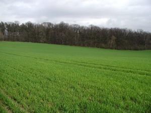 verde, pasto, campo