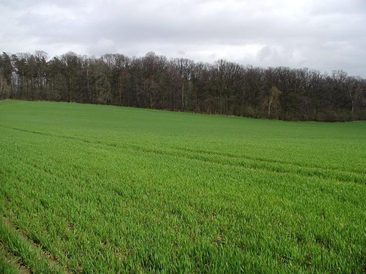 green, pasture, field