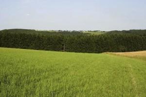 landscape, green, fields